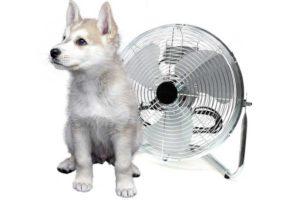 Kleiner Hund vor einem Ventilator
