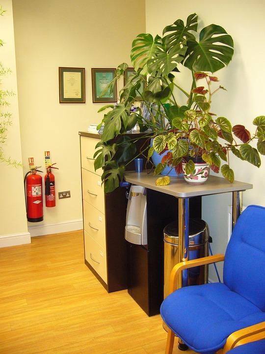 Zimmperflanzen im Büro